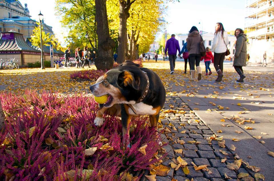Colorful Autumn in Oslo