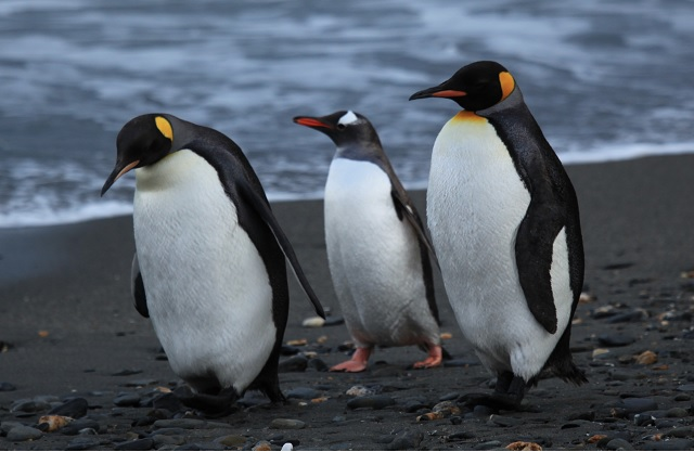 Four High School Students Charged With Penguin Theft in Norway