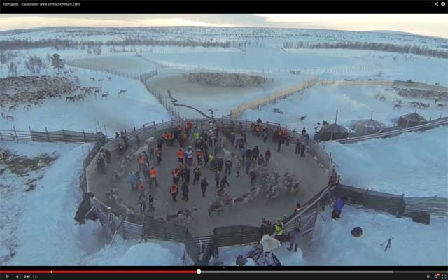 Unique Video of Reindeer Herding in Kautokeino