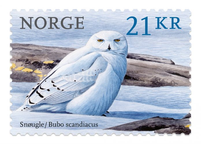 stamp from norway depicting a snowy owl